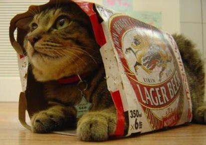 当ブログが猫に占領されていたようです。